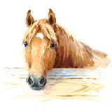 Horse In Stable Watercolor Animal Illustration Hand Painted Stock Photo
