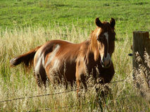 Free Horse In The Grass Royalty Free Stock Image - 3145896