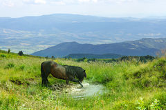 Horse In The Mountain Stock Image