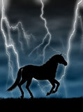 Horse In The Storm Royalty Free Stock Images