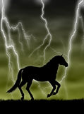 Horse In The Storm Stock Images
