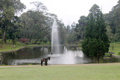 Horse infront of lake fountain Stock Image