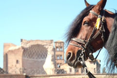 Free Horse Infront Ruine Royalty Free Stock Photography - 1975617
