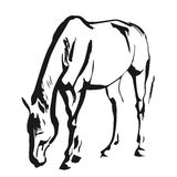 Horse. Ink painted, sketch style, vector illustration Stock Photo