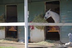 Horse inside a barn Royalty Free Stock Photos