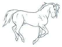 Horse 09. Islamic art, Allah, islamic architecture, arabic writing, Quran verse, islamic vectors, artistic calligraphy islamic, symbols illustrator islamic Stock Images