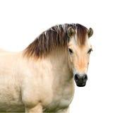 Horse.isolated Royaltyfria Bilder