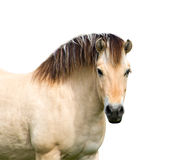 Horse.isolated obrazy royalty free