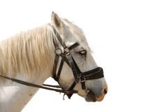 Horse isolated Stock Image