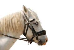 Horse isolated Stock Image