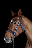 Horse isolated on black Stock Photo
