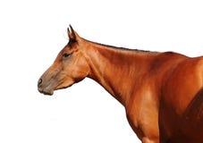 Horse isolated on white Stock Photos