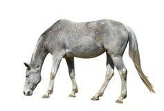 Horse Stock Photo