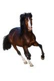 Horse isolated on white Royalty Free Stock Photos