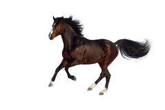 Horse isolated on white Stock Photography