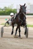 Horse Italian racing. Padova, ITALY - May, 1st 2010: MEMORIAL SERGIO CATTIN PROF CATEGORIA BC Professionisti Horse racing. The winner is the number 1: LEX DI Stock Photos