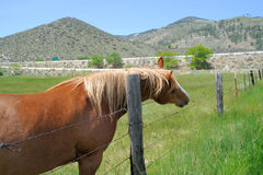 Horse With An Itch. A brown horse with a blonde maine uses a wooden fence post to scratch its neck in the high desert of Nevada Stock Photography