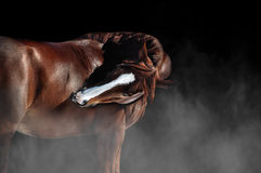 Horse itching Stock Images