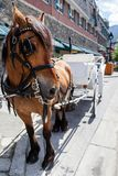 Horse With its Carriage in Tow Stock Image