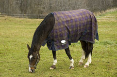 Horse with a Jacket. A horse in the cold with a jacket on stock photo