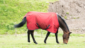 Horse in the jacket Stock Photos