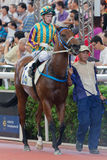 Horse with Jockey. Jockey is riding on the horse and prepare for racing Stock Images