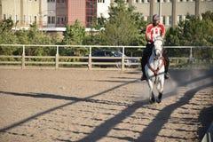 Horse and jockey Royalty Free Stock Photography