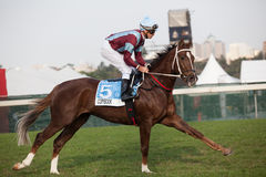 Horse Jockey Close-Up Racing Royalty Free Stock Photo