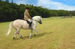 Horse with jockey at dressage tests. In the park Stock Image