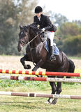 Horse and jockey jumping Royalty Free Stock Images