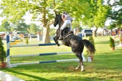 Horse with jockey jumping a hurdle Stock Photos