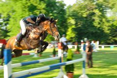 Horse with jockey jumping a hurdle Stock Images