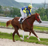 Horse jockey running at race. Royalty Free Stock Images