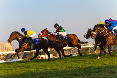 Horse Jockeys Racing Durban July. Horses  and Jockeys at full stretch in the final 400meters of a race to the winning post at the Durban July event. Photo image Stock Photography