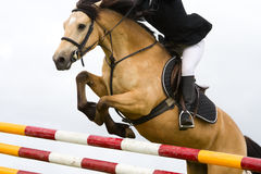 Horse with jokey jumping over the fence, detail Royalty Free Stock Photos