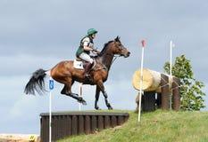 Horse after jump Stock Photos