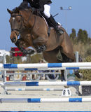 Horse jump Stock Image