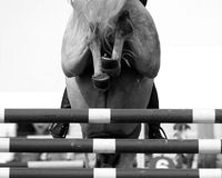 Horse Jump. The backside of a horse jumping over a fence Royalty Free Stock Photo