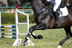 Horse jump in competition Stock Photos