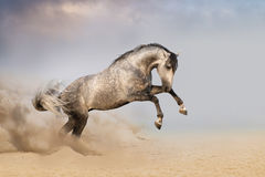 Horse jump in desert with dust stock image