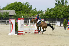 Horse jump Stock Photography