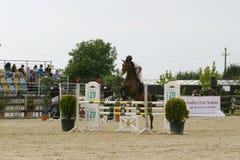Horse jump Royalty Free Stock Image