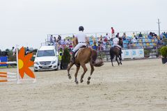 Horse jump at the equitation contest. In Bucharest stock images