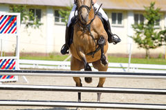 Horse jump a hurdle Stock Image
