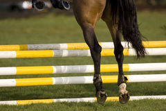 Horse Jumping 001 Stock Images