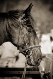 Horse Jumping 031 Royalty Free Stock Photography