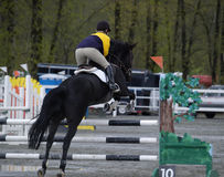 Horse Jumping. Horse and rider taking jump Royalty Free Stock Photography