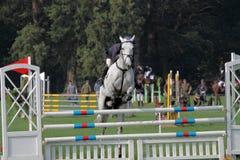 Horse jumping Royalty Free Stock Photo