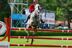 Horse jumping Stock Photography