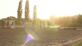 Horse is jumping through a barrier in competition. Professional girl rider galloping on a horse and jumps over the barrier at sunset. Slow motion. Silhouette stock footage